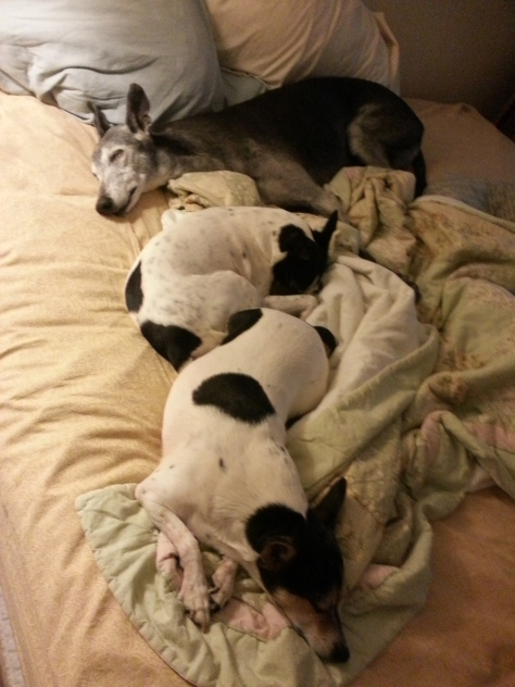 Shall I Wake Them?